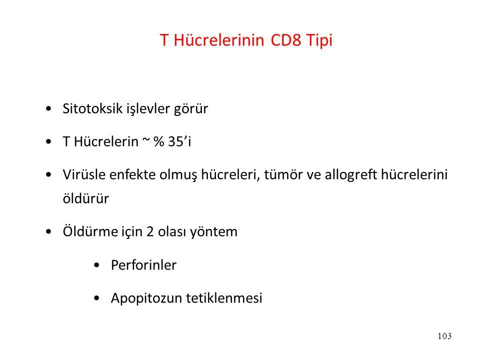 T Hücrelerinin CD8 Tipi Sitotoksik işlevler görür
