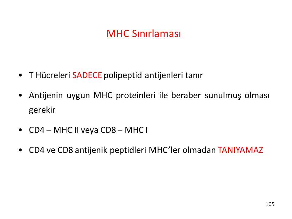 MHC Sınırlaması T Hücreleri SADECE polipeptid antijenleri tanır