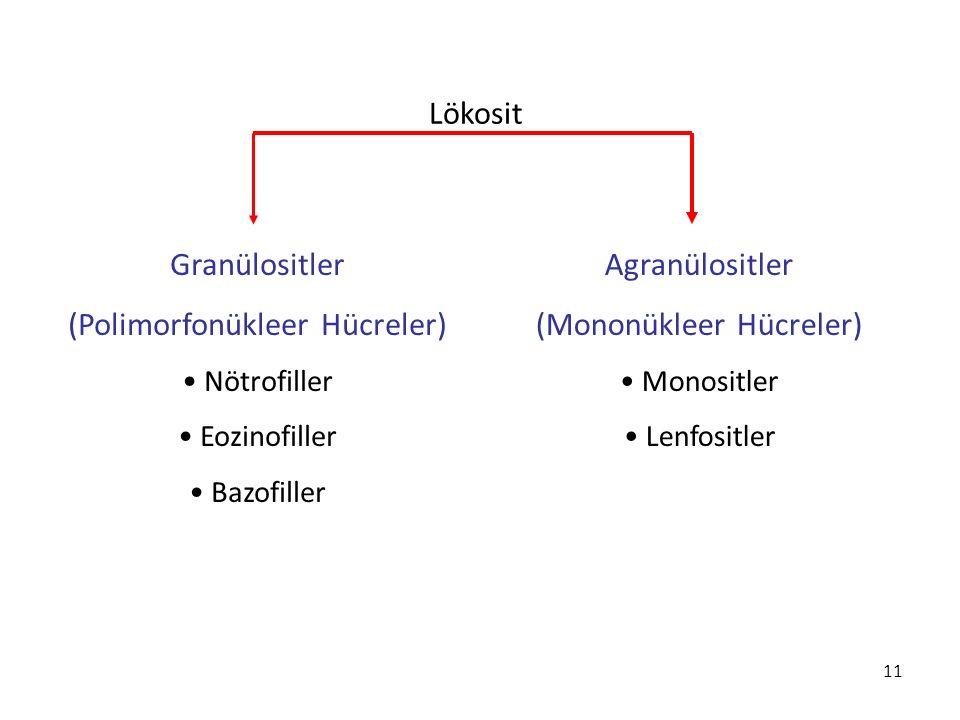 (Polimorfonükleer Hücreler) Agranülositler (Mononükleer Hücreler)