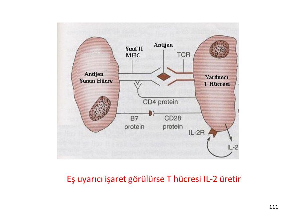 Eş uyarıcı işaret görülürse T hücresi IL-2 üretir