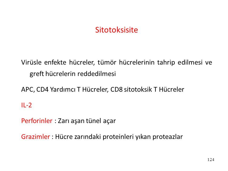 Sitotoksisite Virüsle enfekte hücreler, tümör hücrelerinin tahrip edilmesi ve greft hücrelerin reddedilmesi.