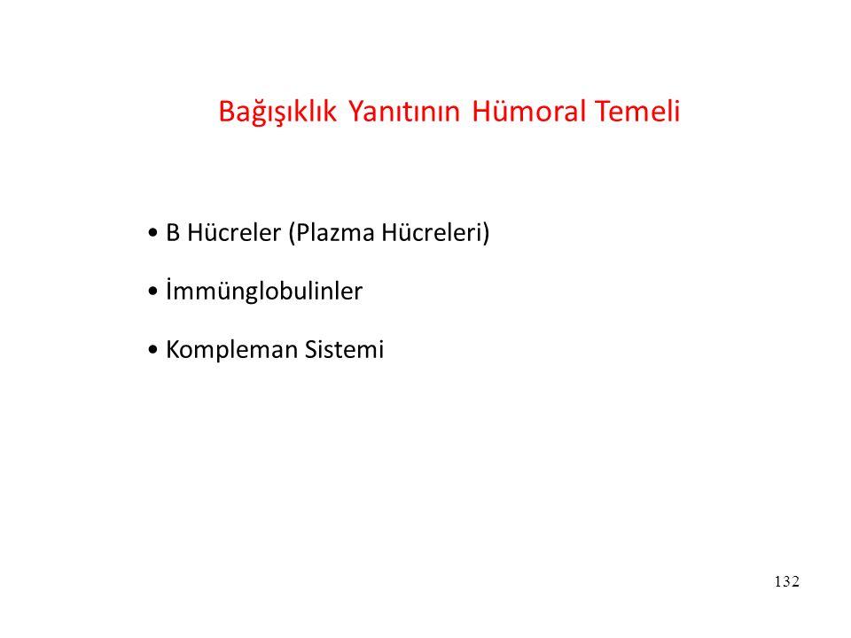 Bağışıklık Yanıtının Hümoral Temeli