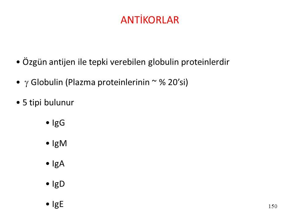 ANTİKORLAR Özgün antijen ile tepki verebilen globulin proteinlerdir