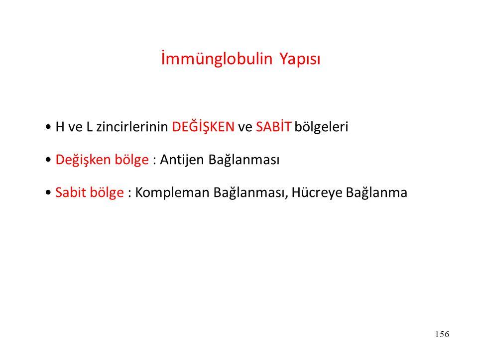 İmmünglobulin Yapısı H ve L zincirlerinin DEĞİŞKEN ve SABİT bölgeleri