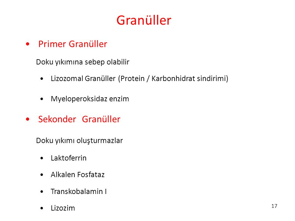 Granüller Primer Granüller Sekonder Granüller