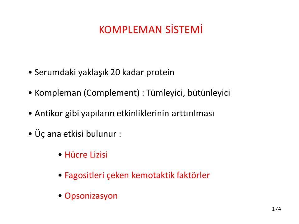 KOMPLEMAN SİSTEMİ Serumdaki yaklaşık 20 kadar protein