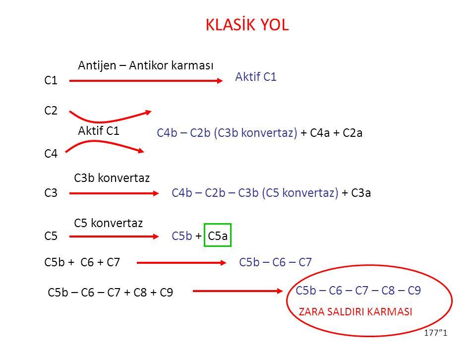 KLASİK YOL Antijen – Antikor karması Aktif C1 C1 C2 Aktif C1