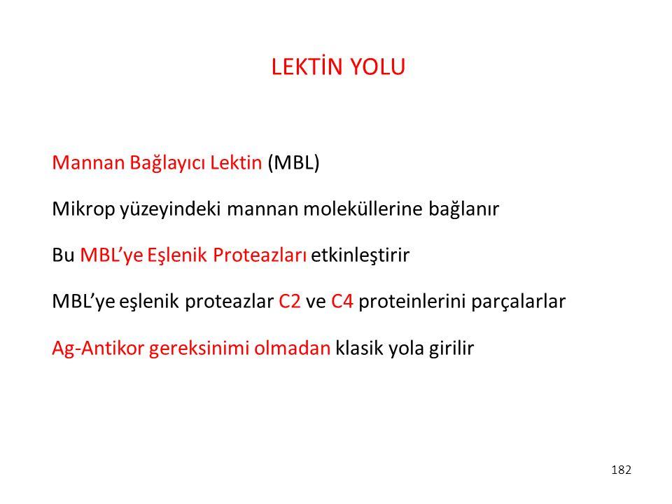 LEKTİN YOLU Mannan Bağlayıcı Lektin (MBL)