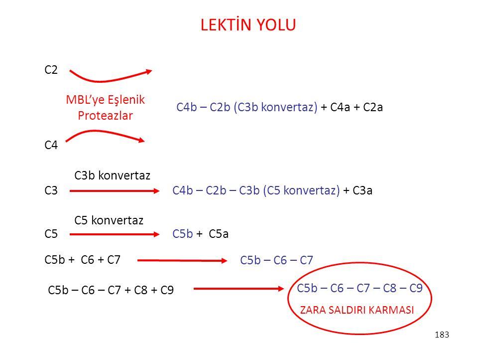 MBL'ye Eşlenik Proteazlar