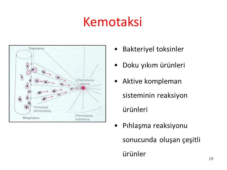 Kemotaksi Bakteriyel toksinler Doku yıkım ürünleri