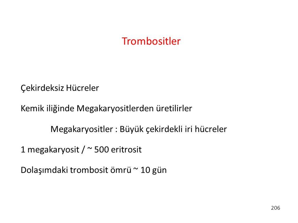 Trombositler Çekirdeksiz Hücreler