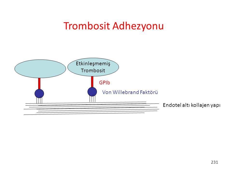 Trombosit Adhezyonu Etkinleşmemiş Trombosit GPIb