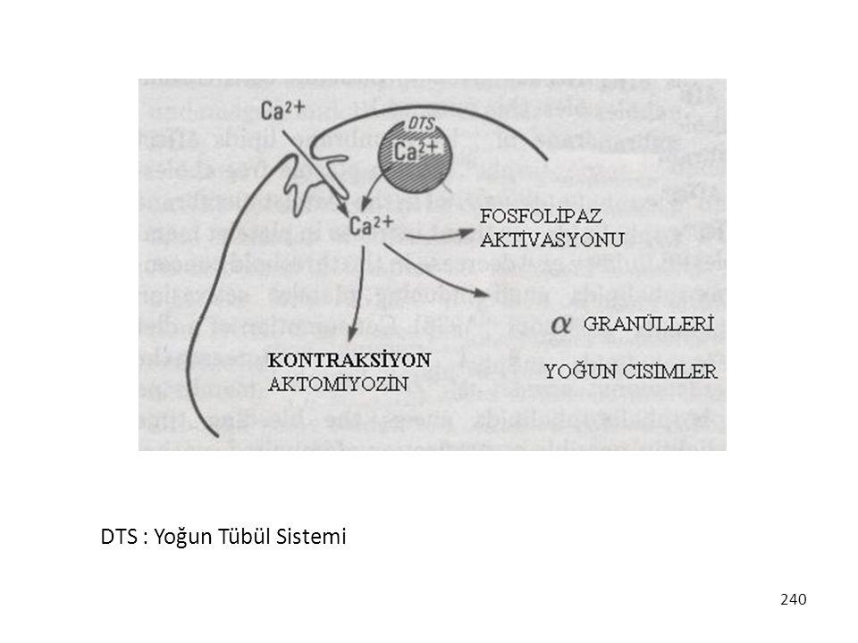 DTS : Yoğun Tübül Sistemi