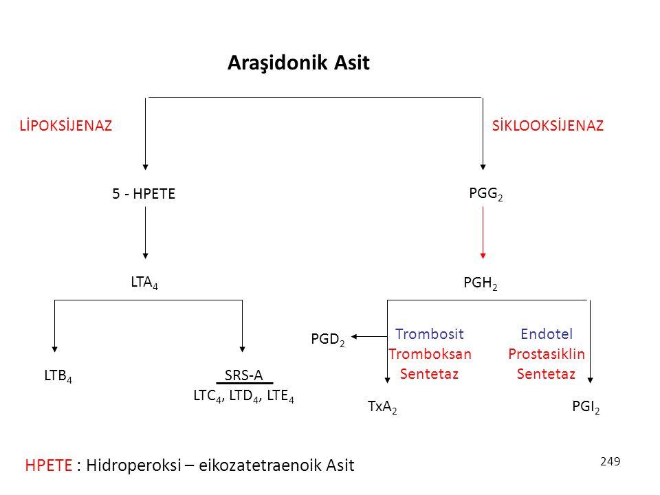 Araşidonik Asit HPETE : Hidroperoksi – eikozatetraenoik Asit