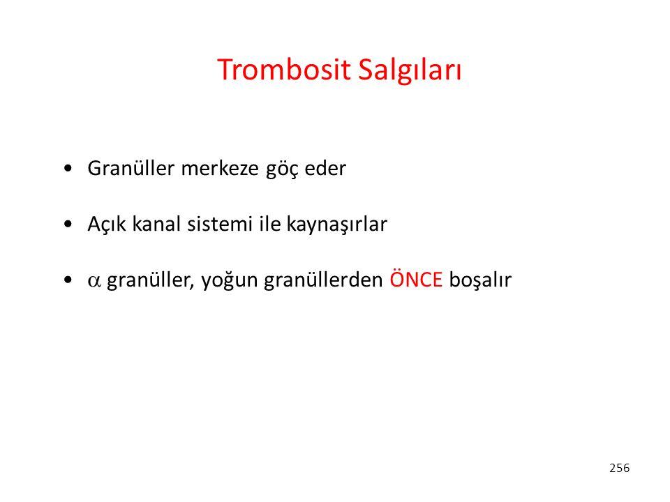 Trombosit Salgıları Granüller merkeze göç eder