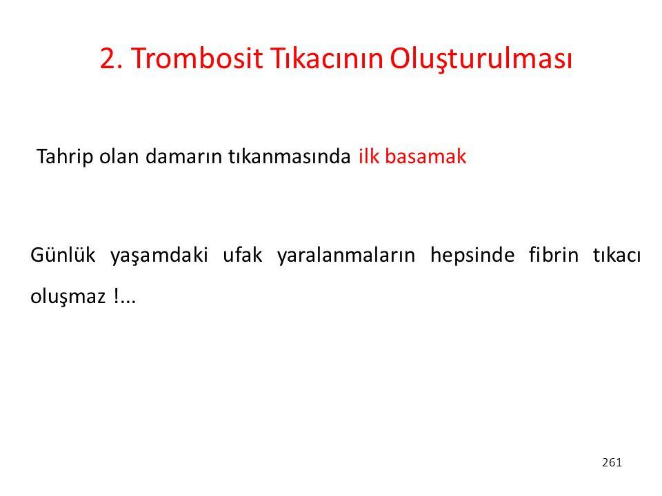2. Trombosit Tıkacının Oluşturulması