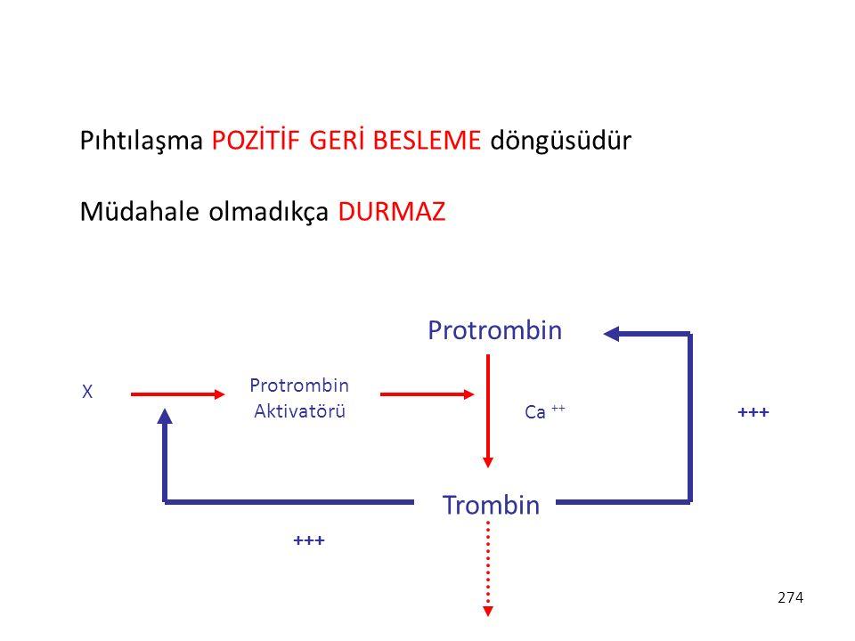 Protrombin Aktivatörü