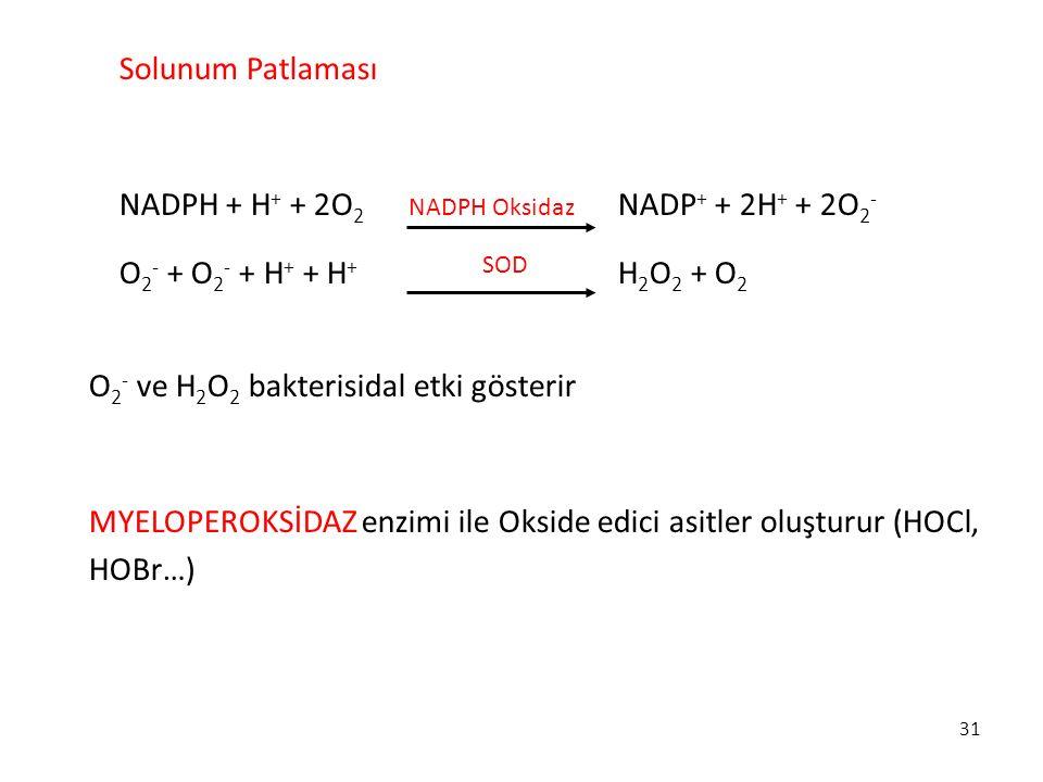 NADPH + H+ + 2O2 NADP+ + 2H+ + 2O2- O2- + O2- + H+ + H+ H2O2 + O2