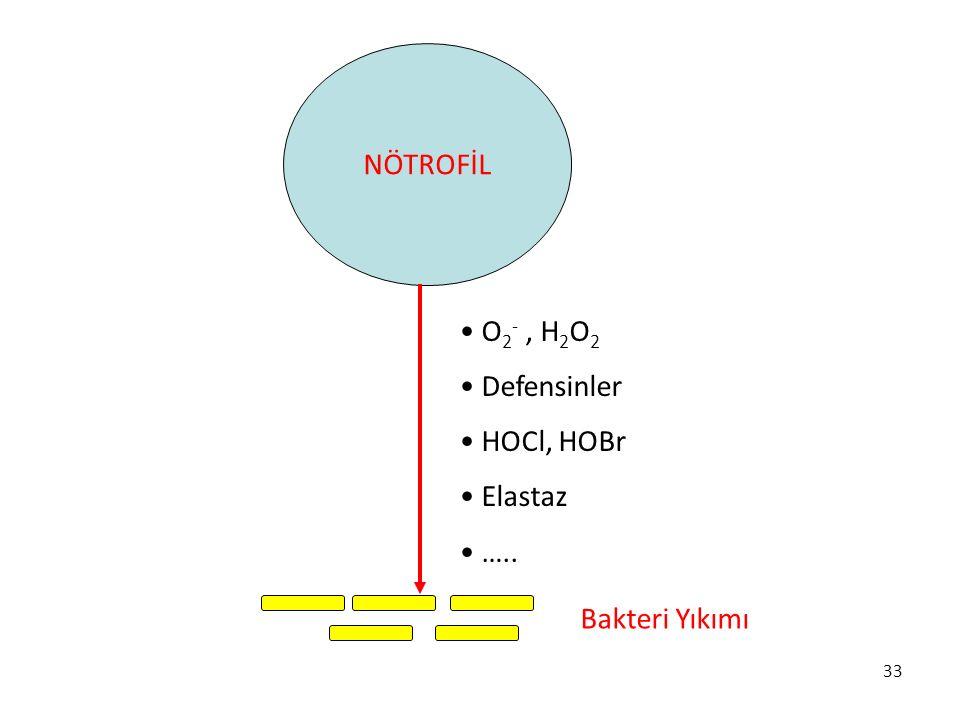 NÖTROFİL O2- , H2O2 Defensinler HOCl, HOBr Elastaz ….. Bakteri Yıkımı