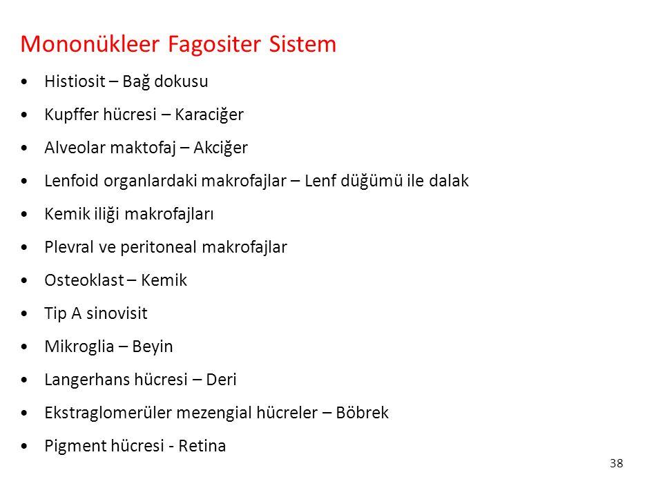 Mononükleer Fagositer Sistem