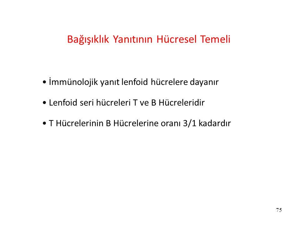 Bağışıklık Yanıtının Hücresel Temeli