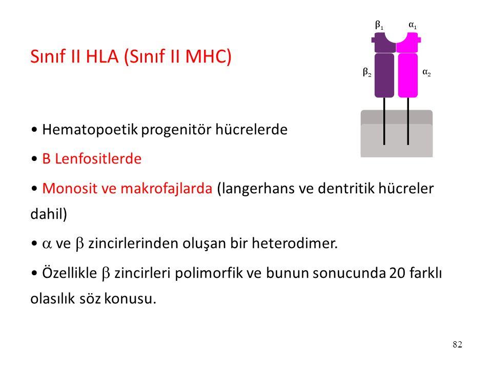 Sınıf II HLA (Sınıf II MHC)