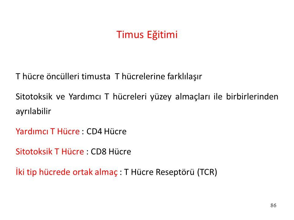 Timus Eğitimi T hücre öncülleri timusta T hücrelerine farklılaşır