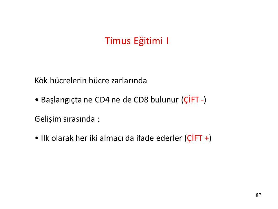 Timus Eğitimi I Kök hücrelerin hücre zarlarında