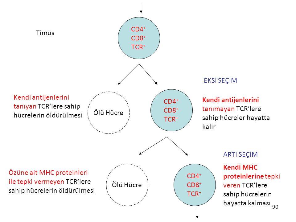 CD4+ CD8+ TCR+ Timus. EKSİ SEÇİM. CD4+ CD8+ TCR+ Kendi antijenlerini tanıyan TCR'lere sahip hücrelerin öldürülmesi.