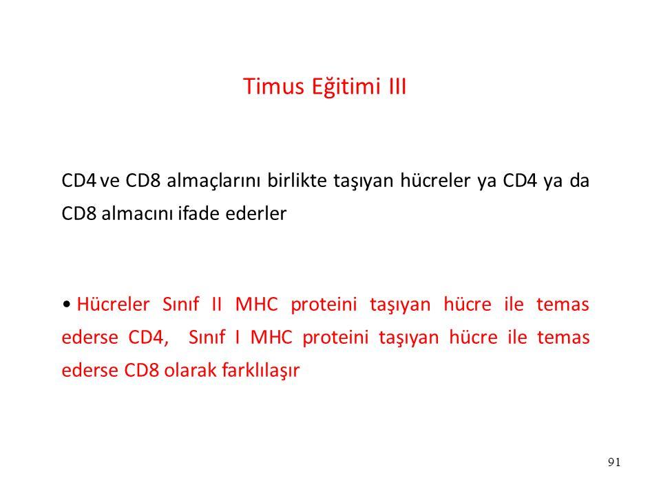 Timus Eğitimi III CD4 ve CD8 almaçlarını birlikte taşıyan hücreler ya CD4 ya da CD8 almacını ifade ederler.