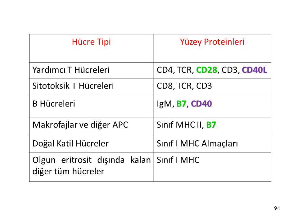 Hücre Tipi Yüzey Proteinleri. Yardımcı T Hücreleri. CD4, TCR, CD28, CD3, CD40L. Sitotoksik T Hücreleri.