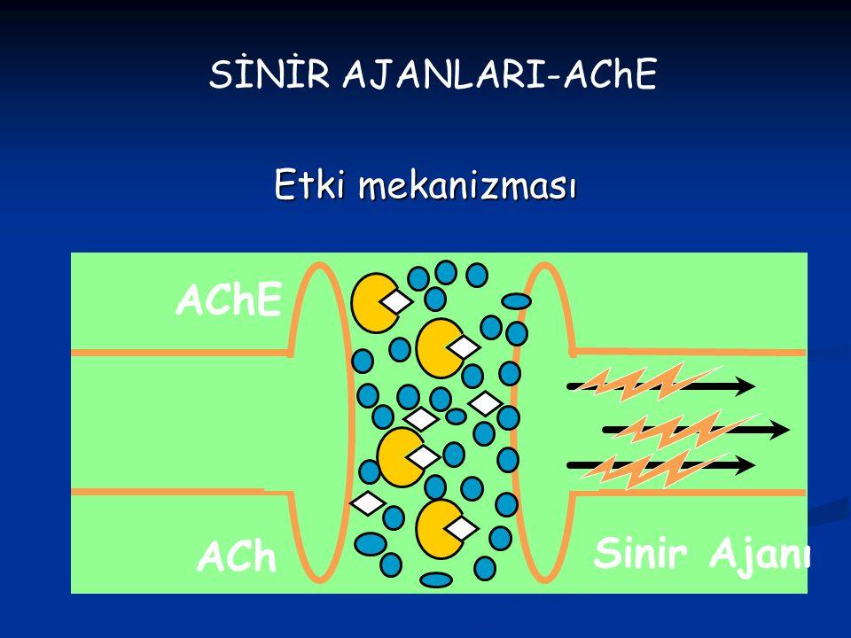 SİNİR AJANLARI-AChE Etki mekanizması AChE ACh Sinir Ajanı