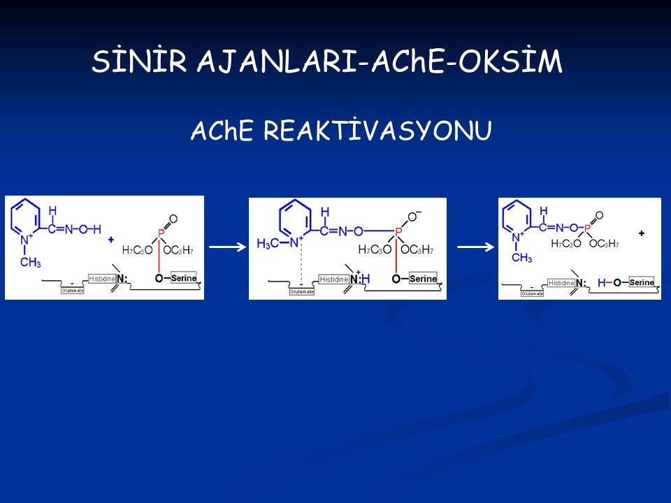 SİNİR AJANLARI-AChE-OKSİM