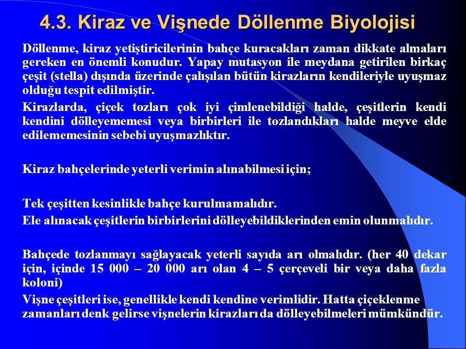 4.3. Kiraz ve Vişnede Döllenme Biyolojisi