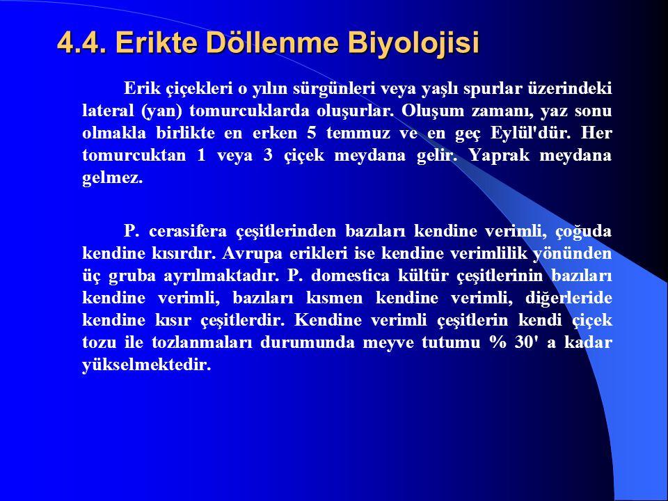 4.4. Erikte Döllenme Biyolojisi