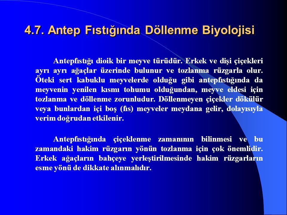 4.7. Antep Fıstığında Döllenme Biyolojisi