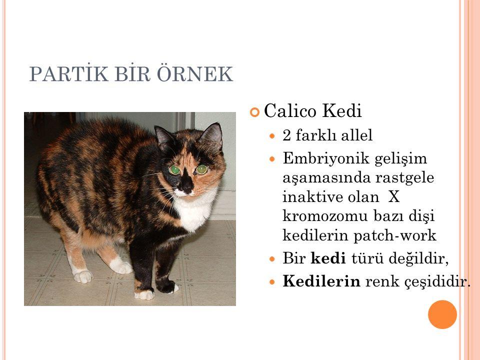 PARTİK BİR ÖRNEK Calico Kedi 2 farklı allel