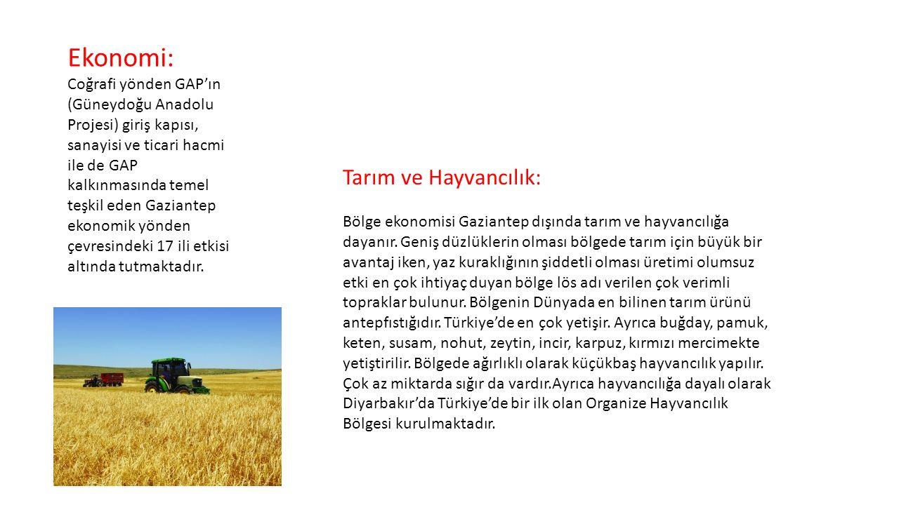 Ekonomi: Tarım ve Hayvancılık:
