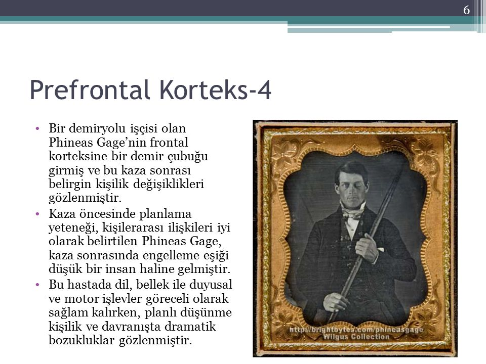 Prefrontal Korteks-4