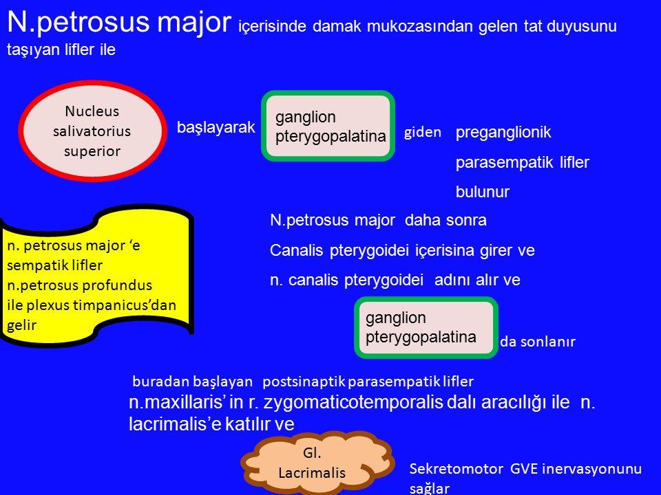 N.petrosus major içerisinde damak mukozasından gelen tat duyusunu taşıyan lifler ile