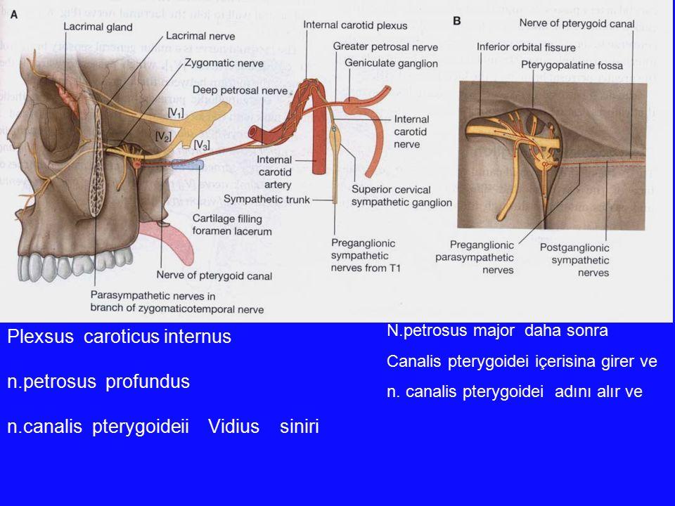 Plexsus caroticus internus n.petrosus profundus