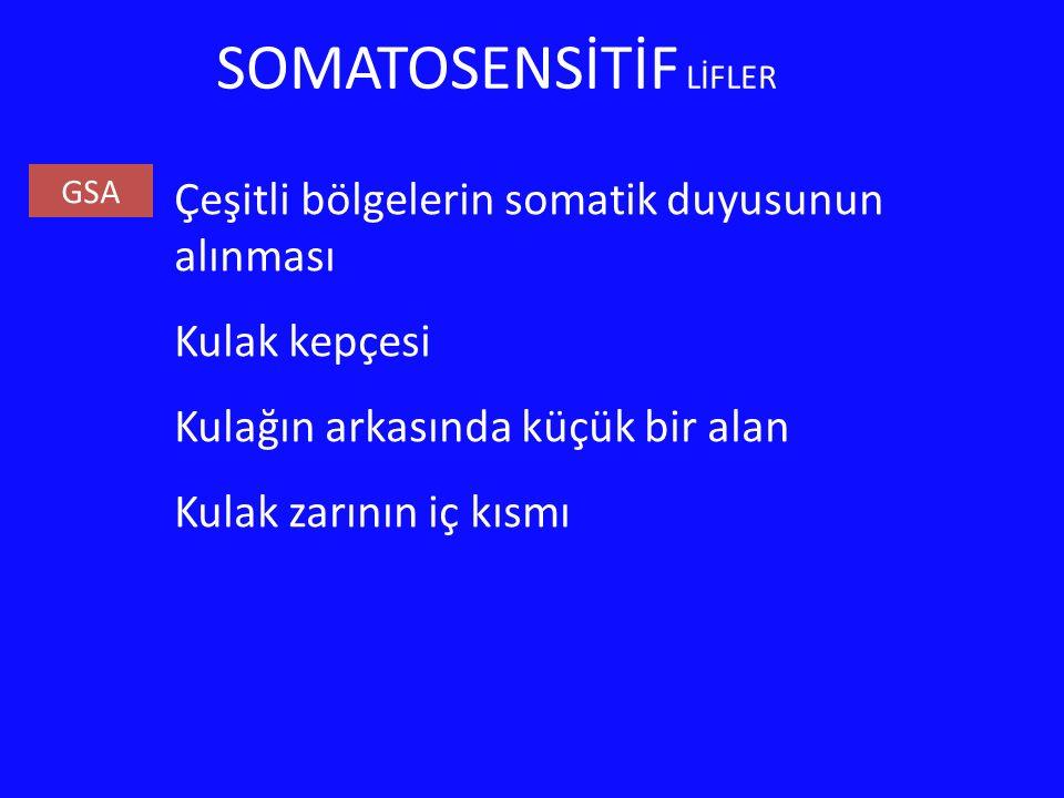 SOMATOSENSİTİF LİFLER