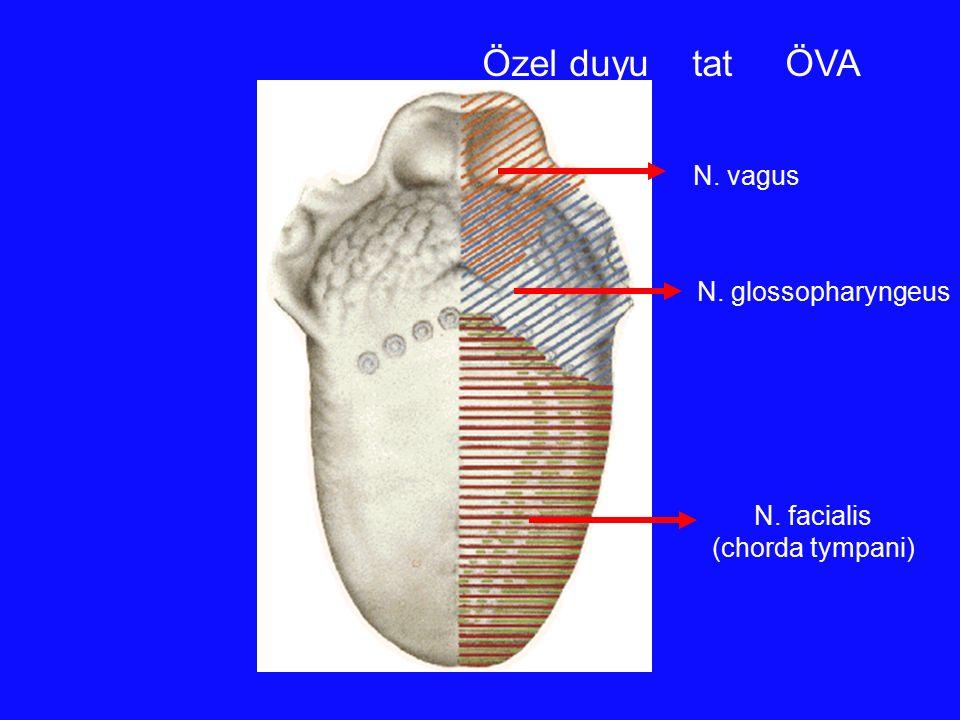 Özel duyu tat ÖVA N. vagus N. glossopharyngeus N. facialis
