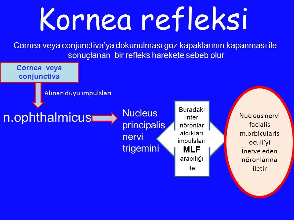 Cornea veya conjunctiva