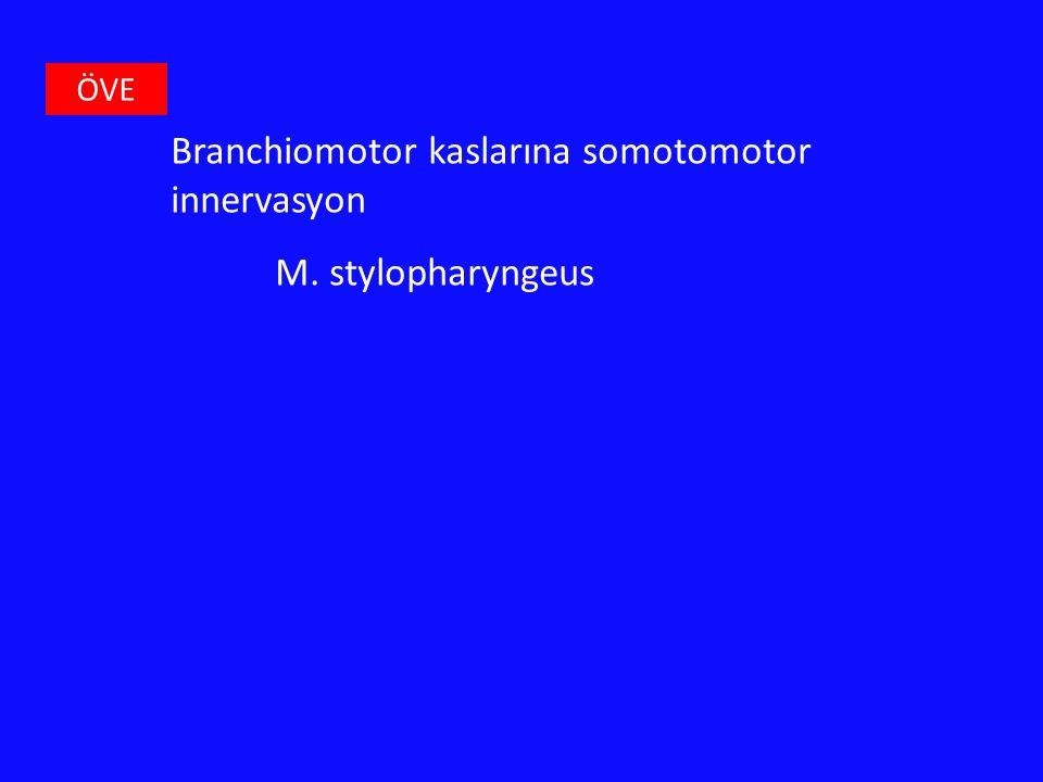 Branchiomotor kaslarına somotomotor innervasyon M. stylopharyngeus