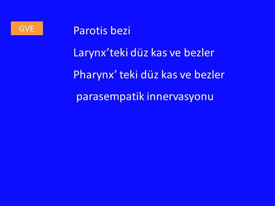 Larynx'teki düz kas ve bezler Pharynx' teki düz kas ve bezler