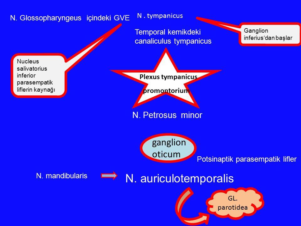 N. auriculotemporalis ganglion oticum N. Petrosus minor N . tympanicus