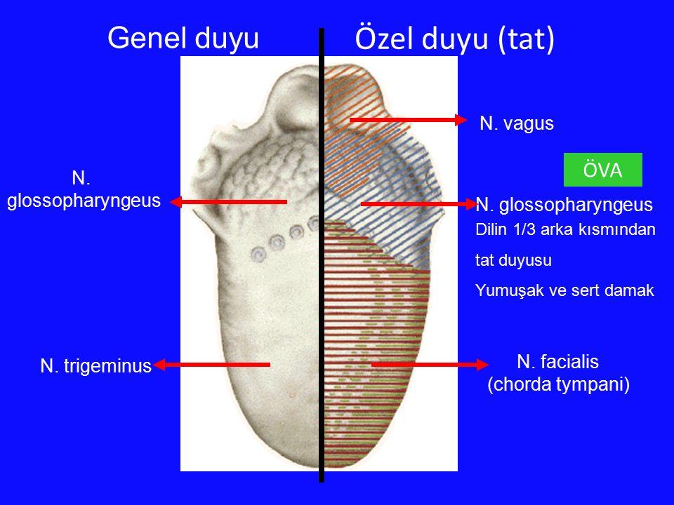Özel duyu (tat) Genel duyu ÖVA N. vagus N. glossopharyngeus