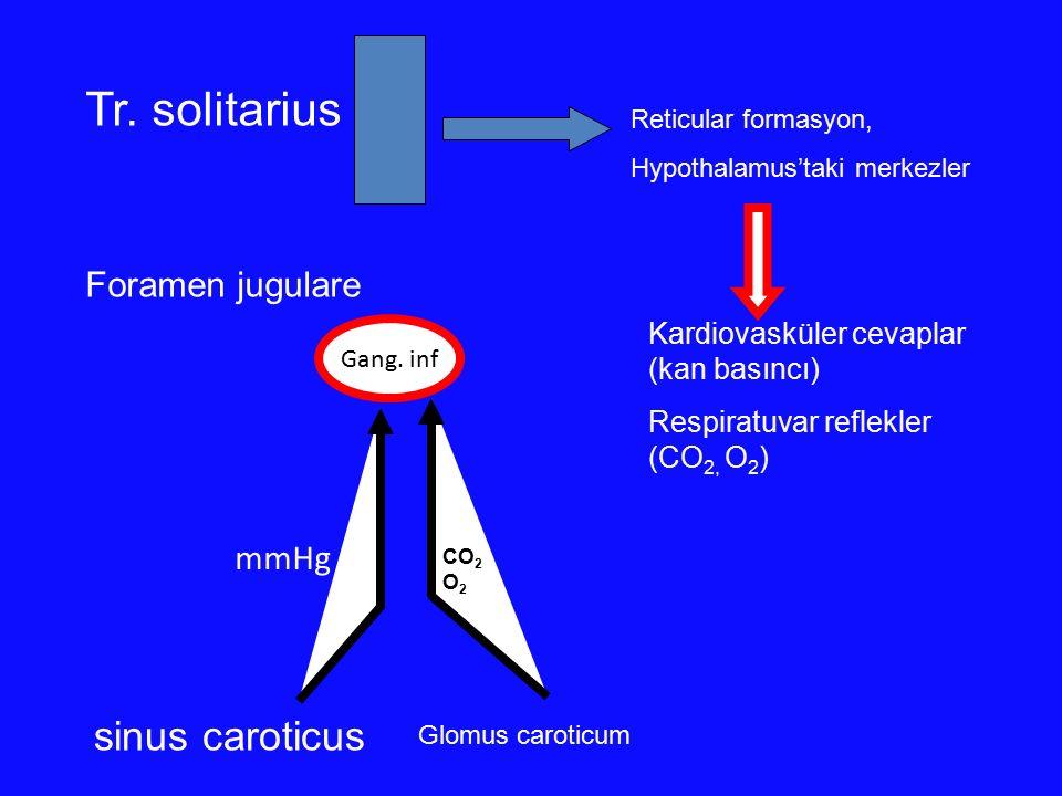 Tr. solitarius sinus caroticus Foramen jugulare mmHg