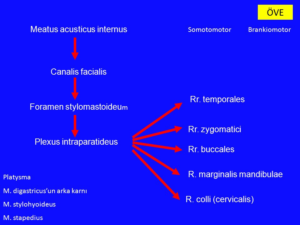 ÖVE Meatus acusticus internus Canalis facialis Rr. temporales